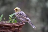 Piękne poidełka dla ptaków